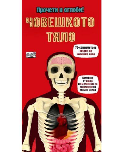 Прочети и сглоби!: Човешкото тяло - 1