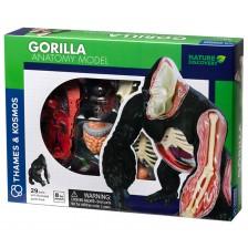 Детски комплект Kosmos - Анатомия на горила -1