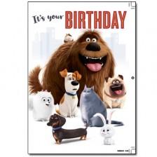 Музикална картичка Danilo - Secret Life of Pets: Birthday -1
